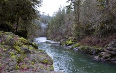 State of Oregon to Log Popular Recreation Areas